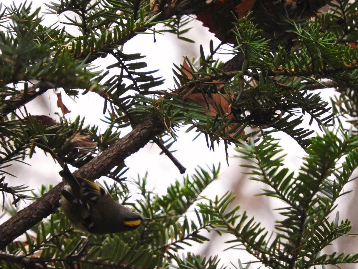 鳥が見やすい季節です_b0174425_13345716.jpg
