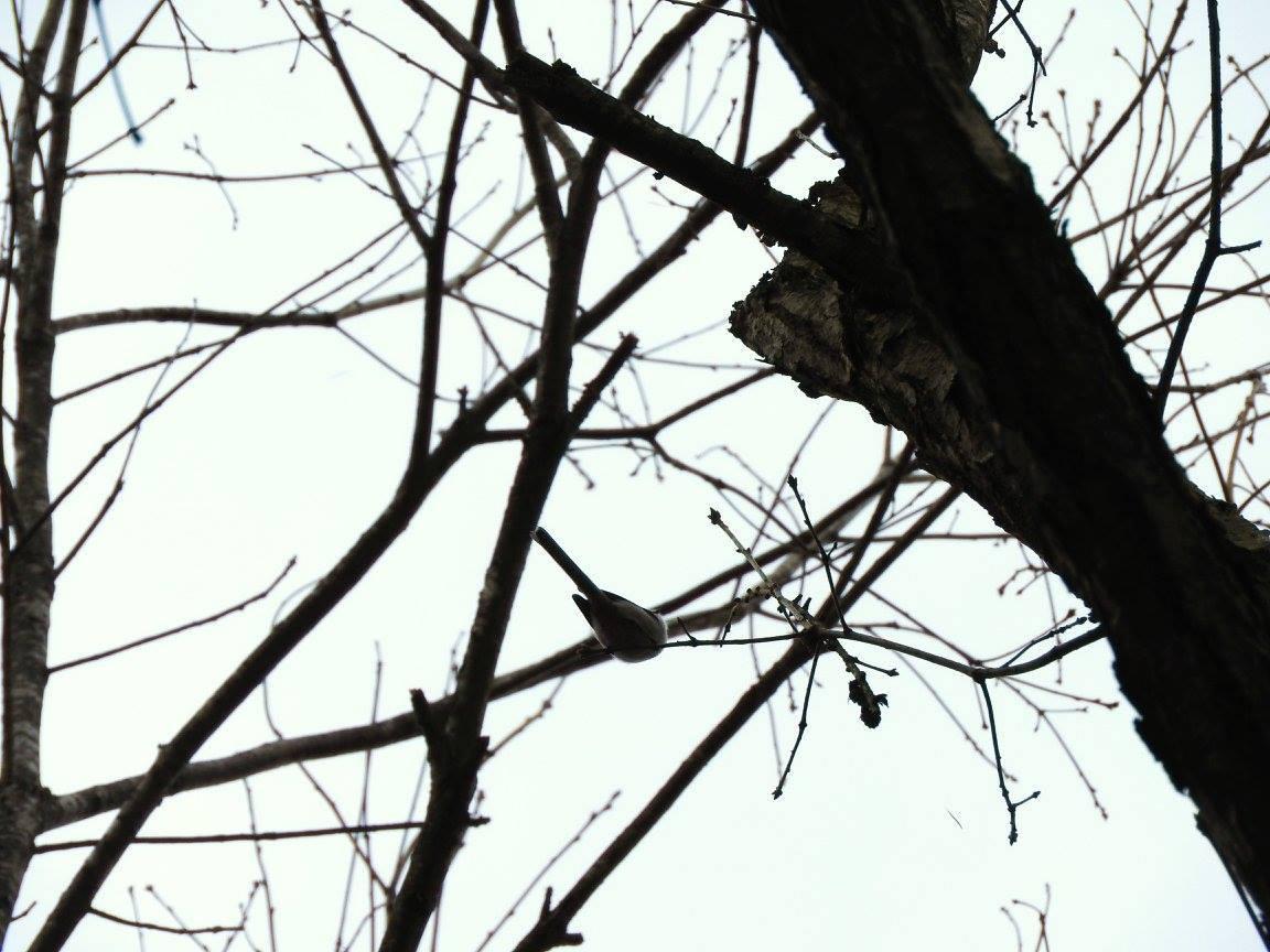 鳥が見やすい季節です_b0174425_13352063.jpg