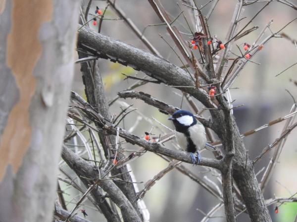 鳥が見やすい季節です_b0174425_13355889.jpg