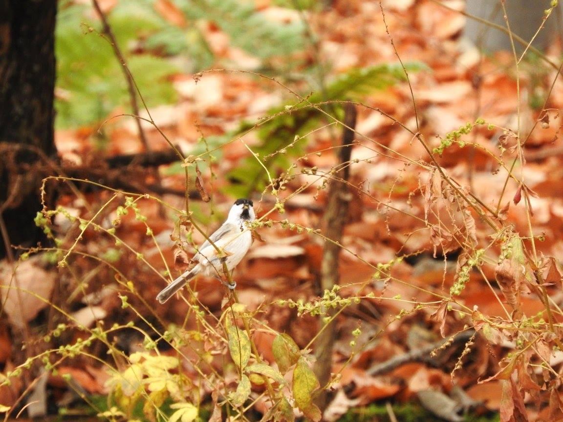 鳥が見やすい季節です_b0174425_15294608.jpg