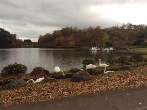 志高湖で楽しいオフ会と車中泊_c0347126_15471422.jpg