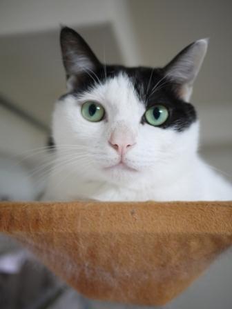猫のお留守番 八朔くん柚子ちゃん小夏くん編。_a0143140_20285193.jpg