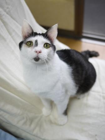 猫のお留守番 八朔くん柚子ちゃん小夏くん編。_a0143140_20294595.jpg