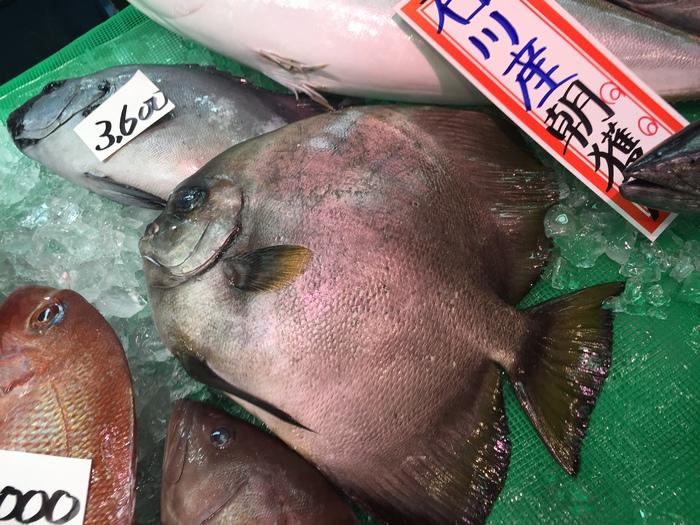 燕魚 Longfin Batfish_c0110051_935610.jpg
