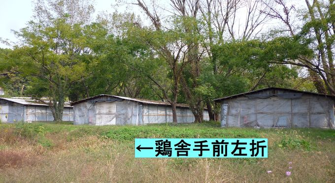 大山道を歩く(尾高道)_b0156456_18151197.jpg