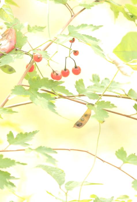 ■■ 赤い実 茶色い実 ■■_c0195662_2221101.jpg
