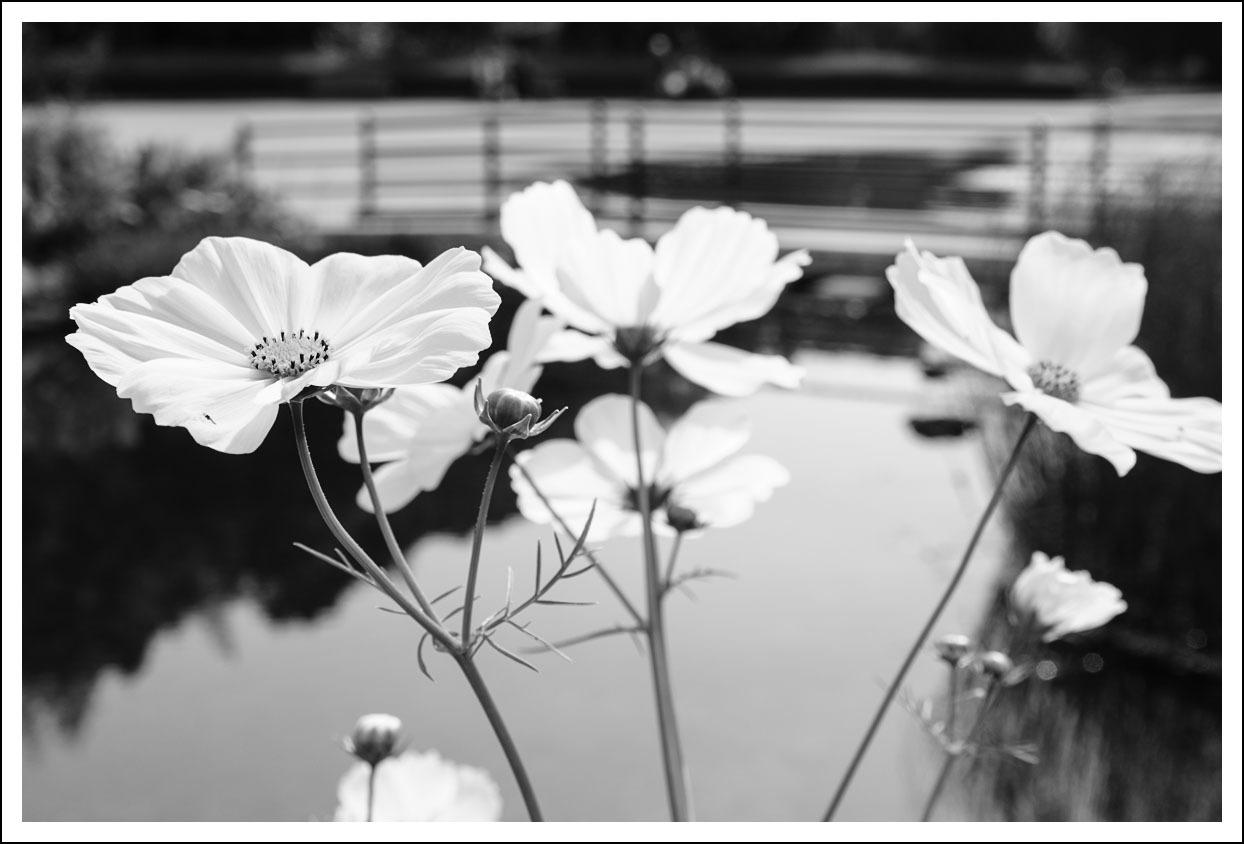 京都府立植物園(4)_e0354867_20420274.jpg