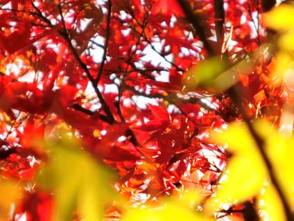 f0345284_20091011.jpg
