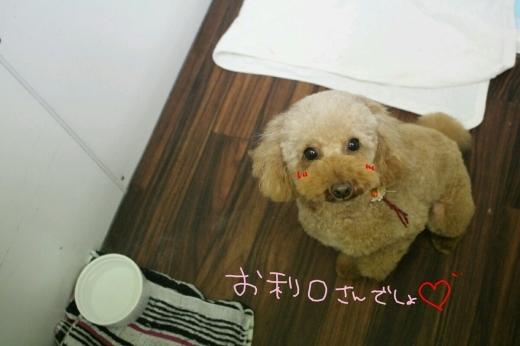 b0130018_11145157.jpg