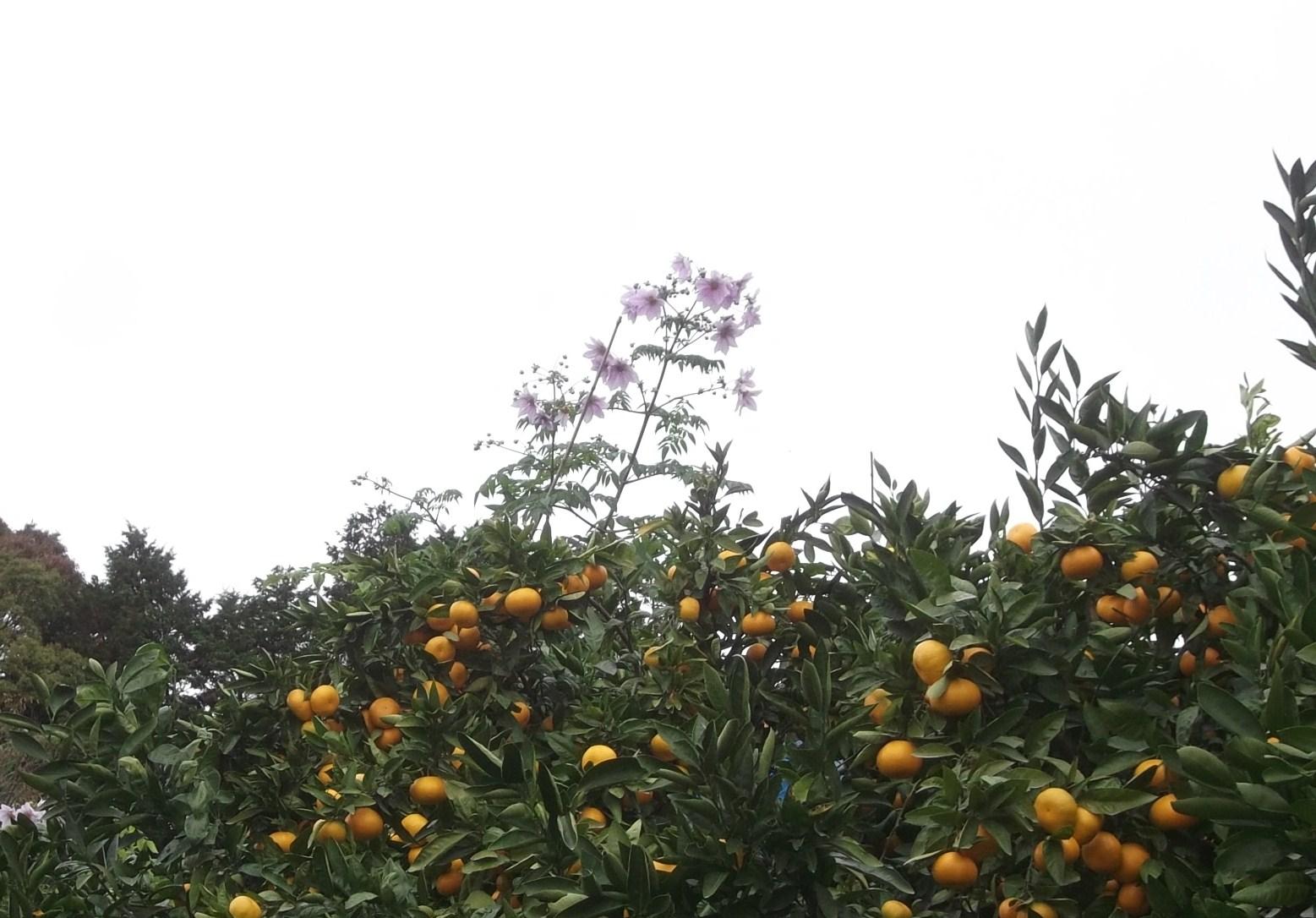畑に咲く花_b0137932_17181463.jpg