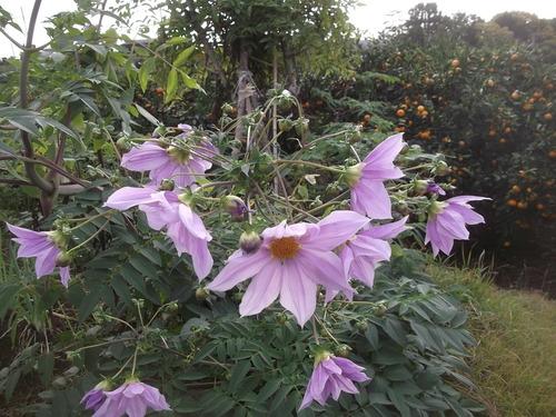 畑に咲く花_b0137932_17205075.jpg