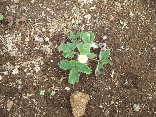畑に咲く花_b0137932_17213239.jpg