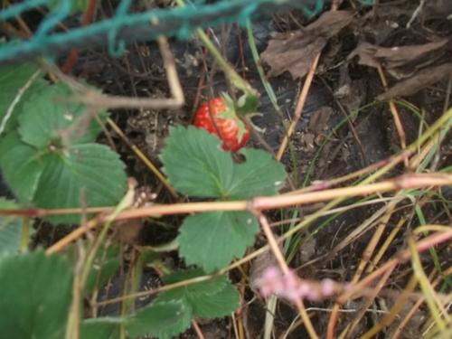 畑に咲く花_b0137932_17215689.jpg