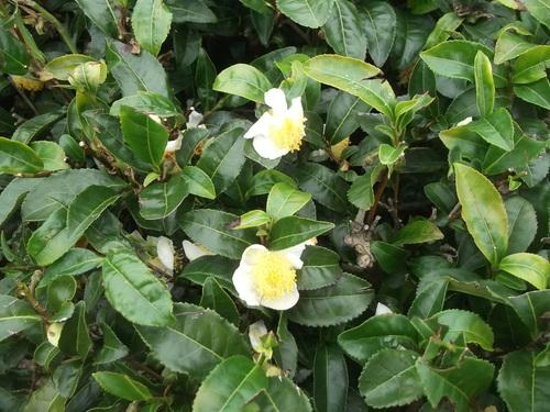 畑に咲く花_b0137932_17233443.jpg