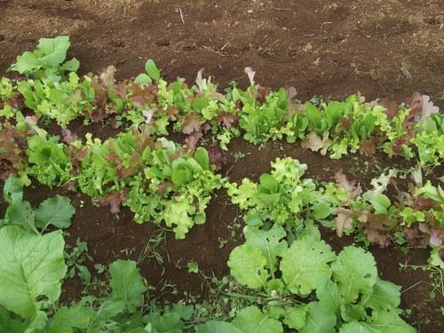 エンドウ豆の種まき!_b0137932_17273349.jpg
