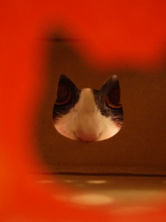 【ロイヤルカナン】犬と猫の健康アンバサダー・プログラム猫じゃらしBOXモニター。_a0143140_23361422.jpg