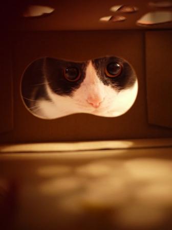 【ロイヤルカナン】犬と猫の健康アンバサダー・プログラム猫じゃらしBOXモニター。_a0143140_23372846.jpg