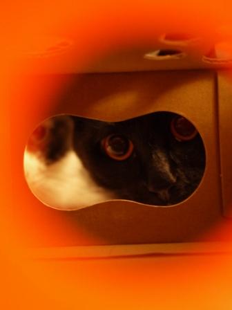 【ロイヤルカナン】犬と猫の健康アンバサダー・プログラム猫じゃらしBOXモニター。_a0143140_233762.jpg