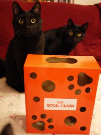 【ロイヤルカナン】犬と猫の健康アンバサダー・プログラム猫じゃらしBOXモニター。_a0143140_23392447.jpg