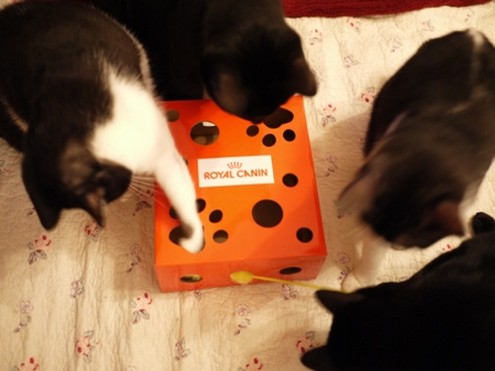 【ロイヤルカナン】犬と猫の健康アンバサダー・プログラム猫じゃらしBOXモニター。_a0143140_2341378.jpg