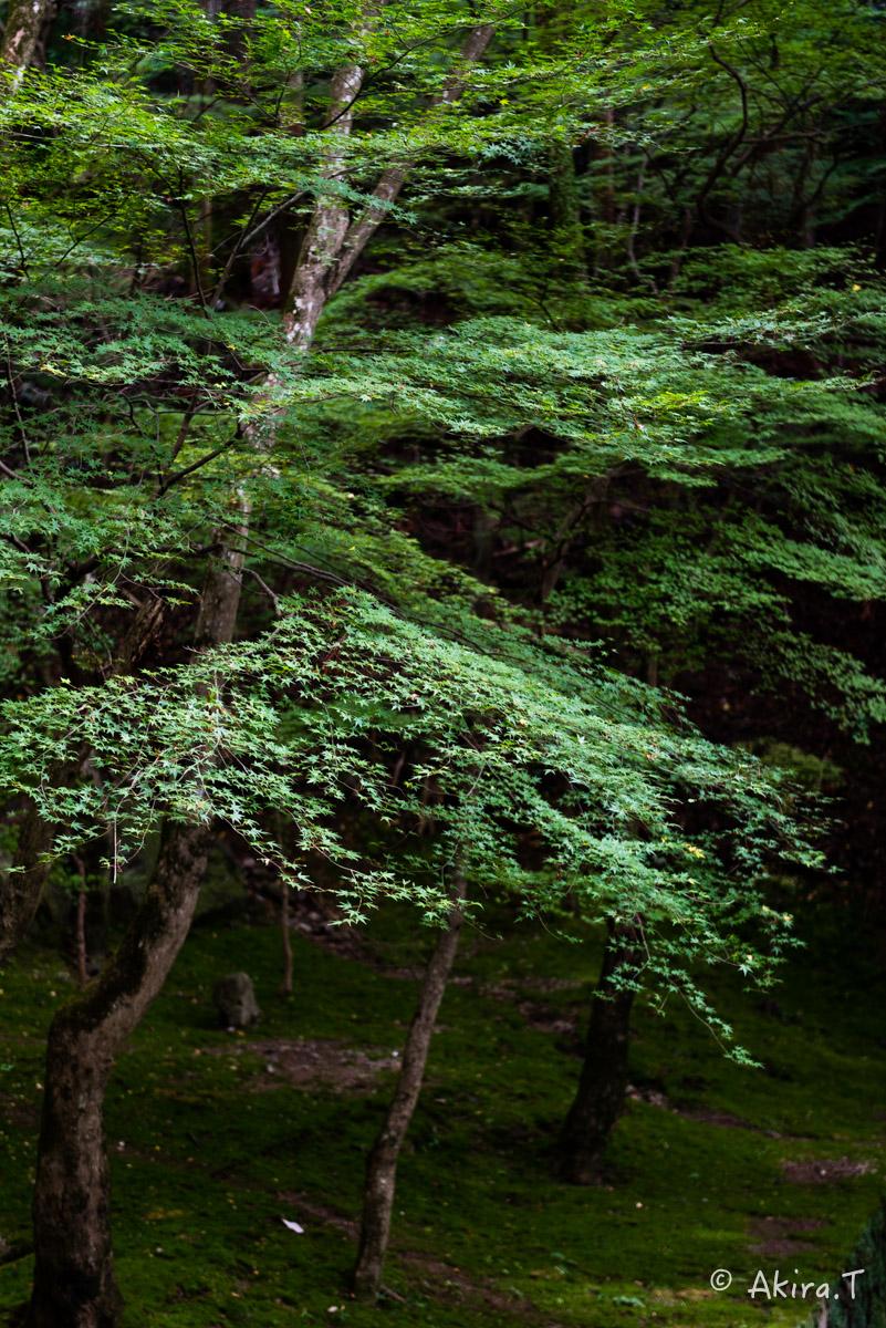 京都・亀岡の紅葉 2015 〜法常寺〜_f0152550_22523068.jpg