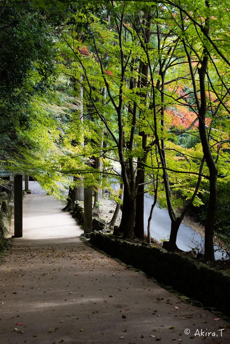 京都・亀岡の紅葉 2015 〜法常寺〜_f0152550_2253159.jpg