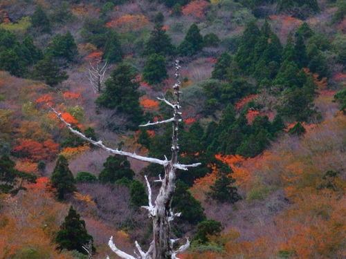 太鼓岩の紅葉!_b0160957_17223284.jpg