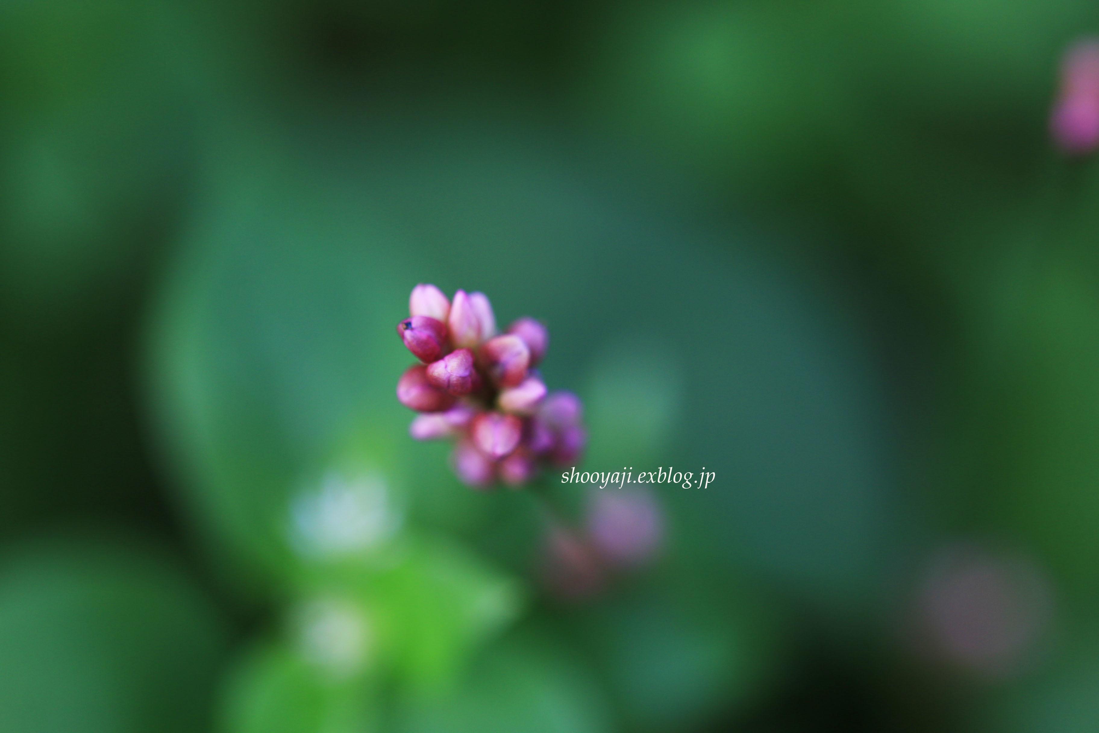 小さなイノチ・・・Ⅴ_a0333661_16593352.jpg