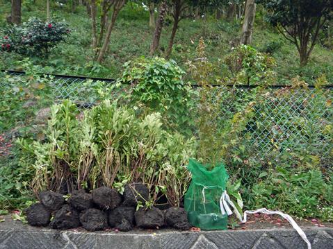 モミジなど植樹本数は138本に11・12六国見山臨時手入れ②_c0014967_5522334.jpg