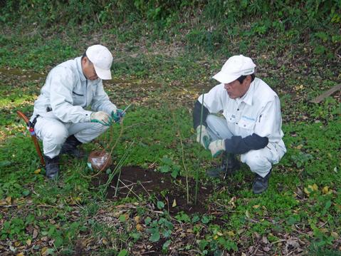 モミジなど植樹本数は138本に11・12六国見山臨時手入れ②_c0014967_5563061.jpg