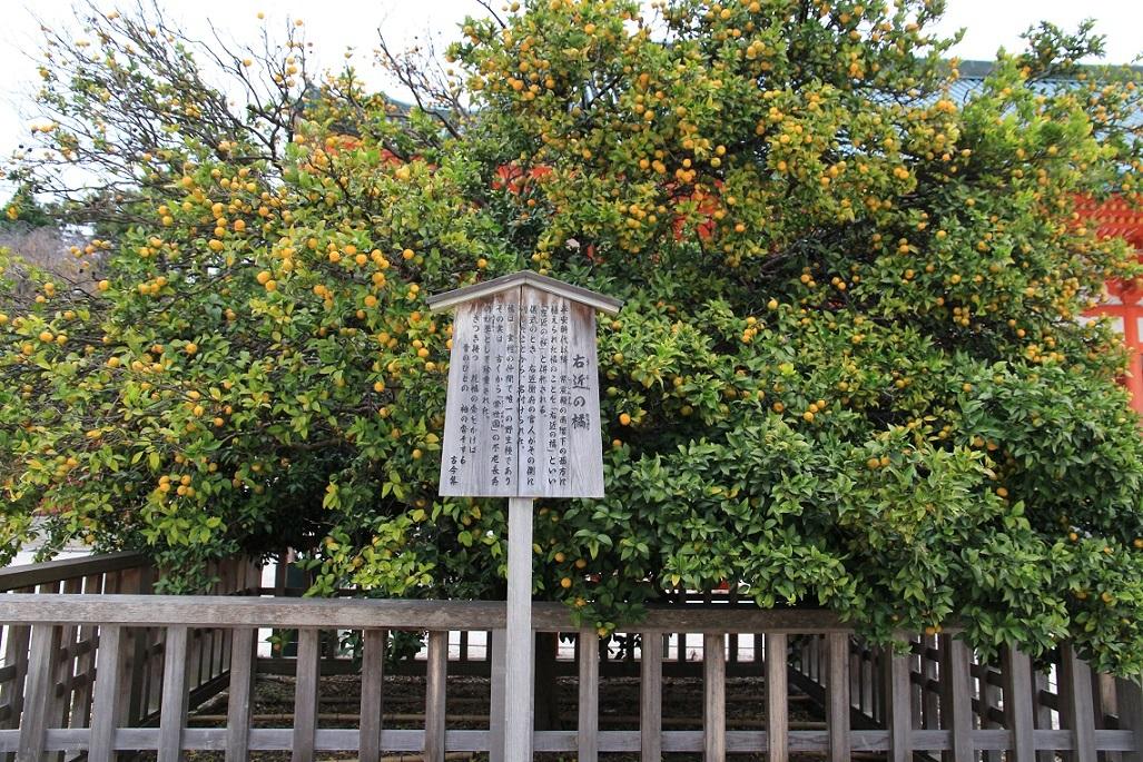 富士山が綺麗でした。~タチバナ(橘)の実~_a0107574_17361586.jpg