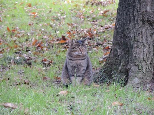 餌配達人を待つ公園猫(2)_e0232277_14135451.jpg