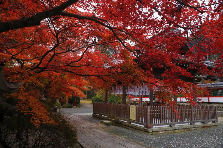 鍬山神社_e0051888_2219261.jpg