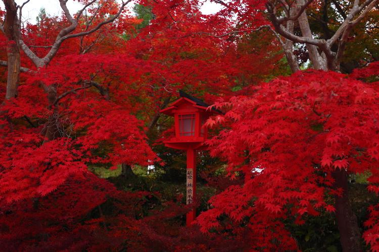 鍬山神社_e0051888_22195838.jpg