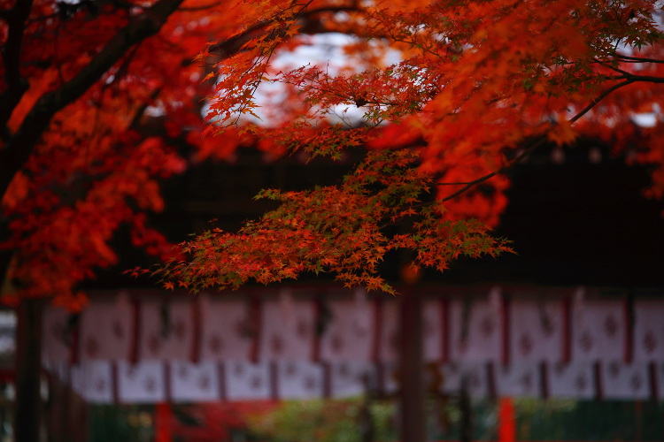 鍬山神社_e0051888_221965.jpg
