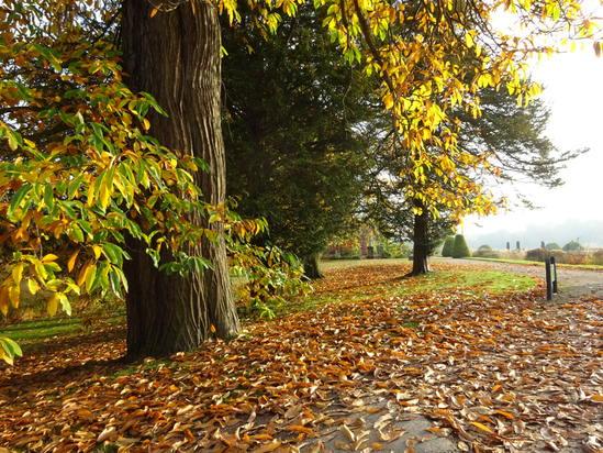 トレンタムガーデンズでお散歩_c0237291_1911482.jpg