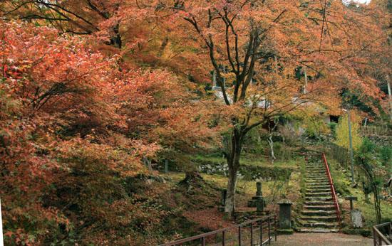 紅葉だより10 桃源山地蔵院_e0048413_16162527.jpg