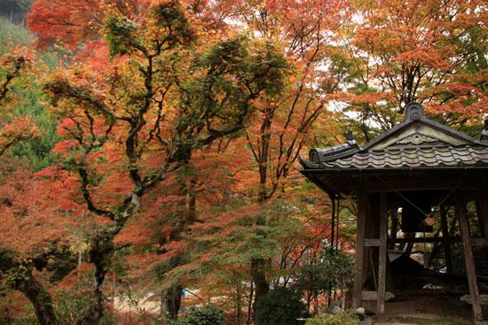 紅葉だより10 桃源山地蔵院_e0048413_1616368.jpg