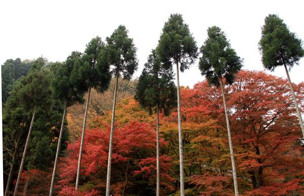 紅葉だより10 桃源山地蔵院_e0048413_16171381.jpg