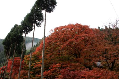 紅葉だより10 桃源山地蔵院_e0048413_16172917.jpg