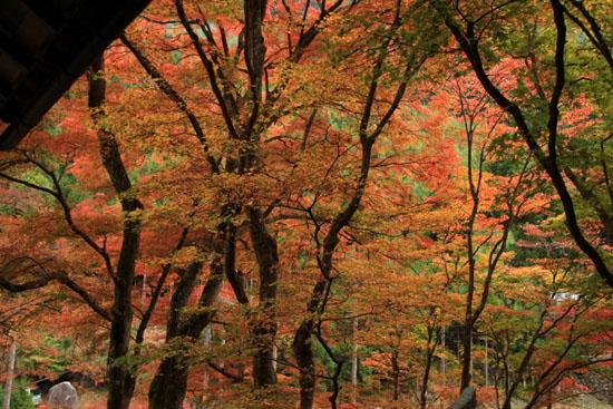 紅葉だより10 桃源山地蔵院_e0048413_1617328.jpg