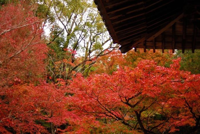 井山宝福寺_f0224648_06581215.jpg