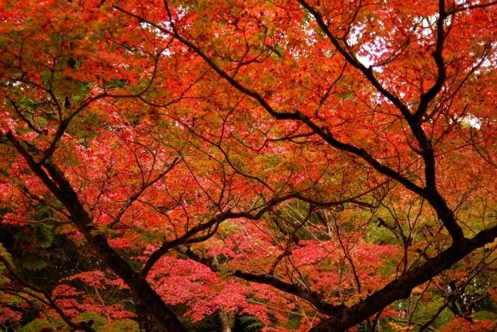 井山宝福寺_f0224648_06591276.jpg