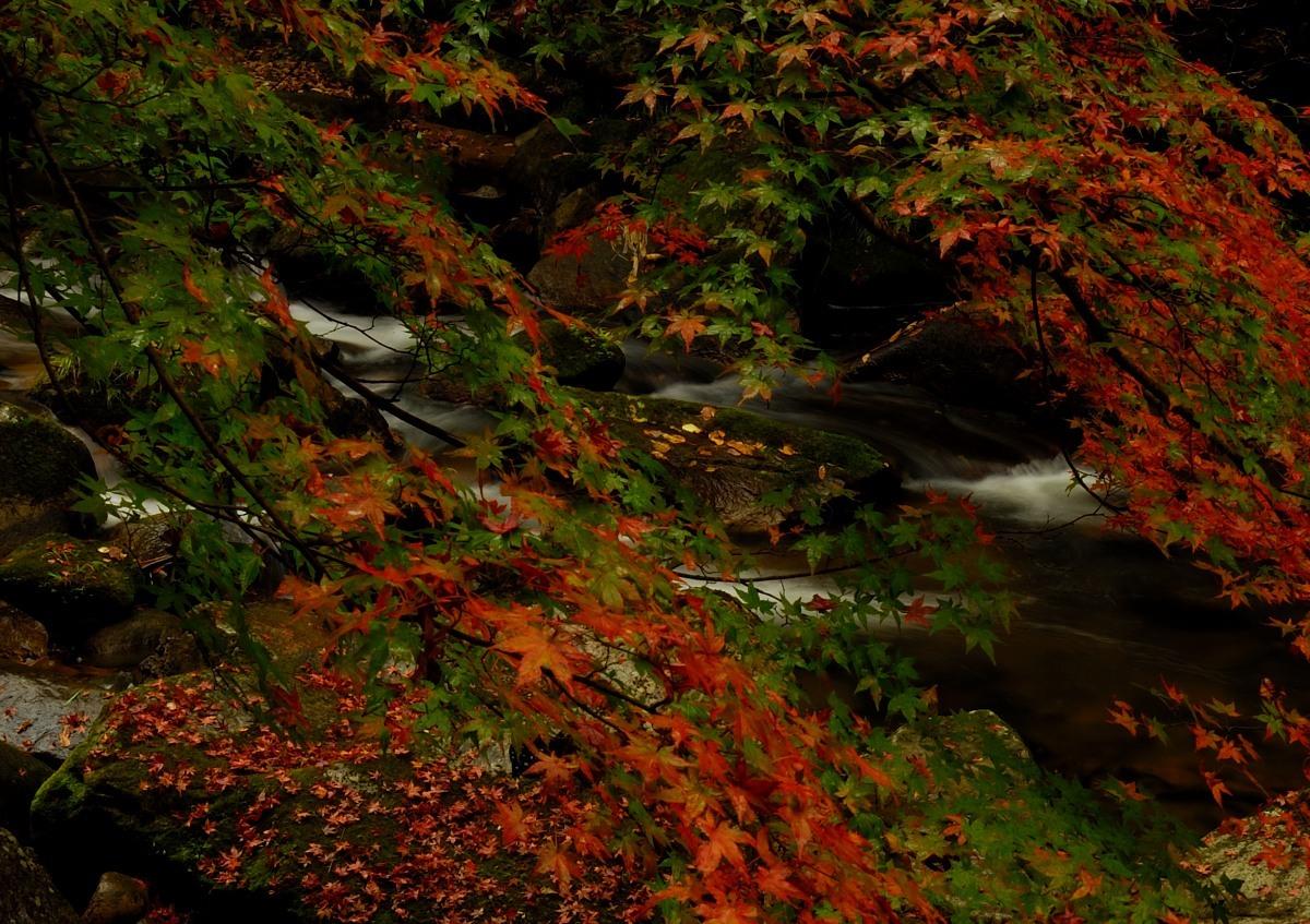 雨の豪溪♪_f0224648_14200984.jpg