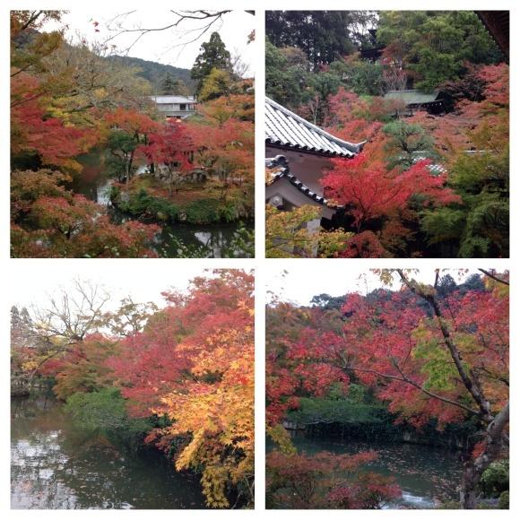 小旅行 紅葉の京都へ_d0152765_12043748.jpeg