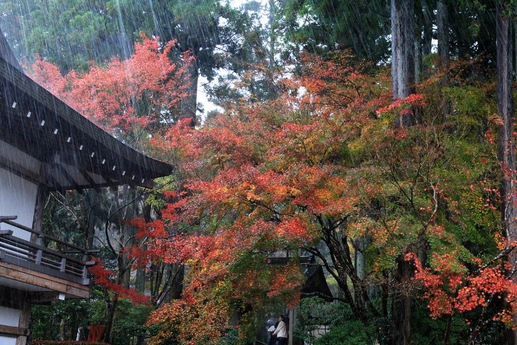 雨の三千院_a0107574_17304025.jpg