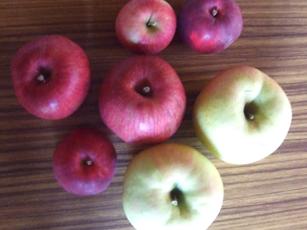 林檎食べ比べ_e0182479_0205455.jpg
