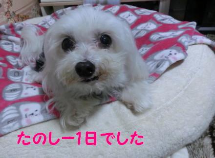 b0193480_15592273.jpg