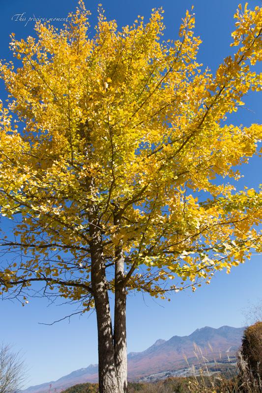 11/5 とちの木から南アルプス方面へ林道を入る_c0137403_1548413.jpg