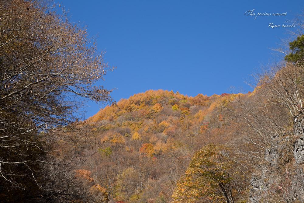 11/5 とちの木から南アルプス方面へ林道を入る_c0137403_15494980.jpg